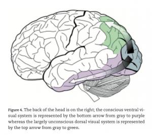 corrélats neuronaux de la conscience