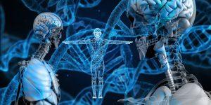 La recherche sur les neurones miroirs